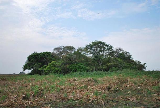 Vista de la isla forestal de La Chacra en los Llanos de Moxos bolivianos. (José Capriles/PSU)