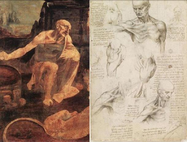 Leonardo Da Vinci, San Girolamo (1480 aprox.) (Public Domain) y en estudios comparativos de los músculos de la articulación del hombro y el cuello. (Dominio público)