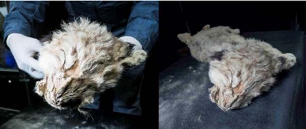 Los científicos encontraron rastros de lesiones internas en el cuerpo de Boris. (Siberian Times)