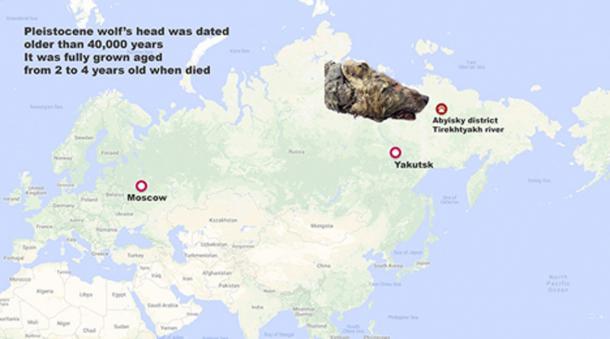 El hombre local Pavel Efimov encontró la cabeza del lobo del Pleistoceno. (Siberian Times)