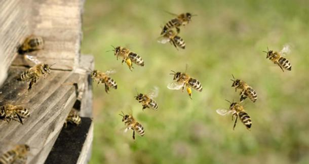 Los animales domésticos, incluidas las colmenas de abejas, estaban regulados por la antigua ley irlandesa. (C. Schüßler/ Adobe)