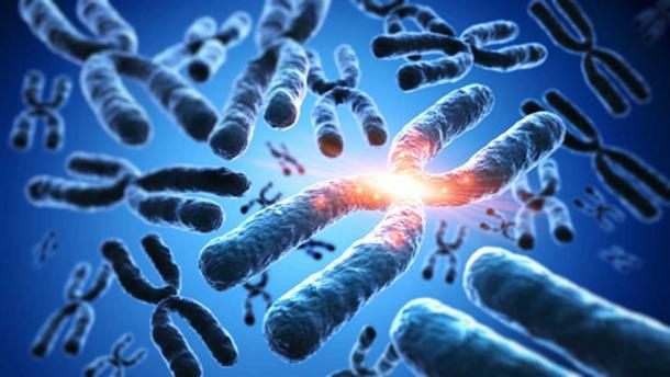Los cromosomas. (peterschreiber.media/ Adobe)