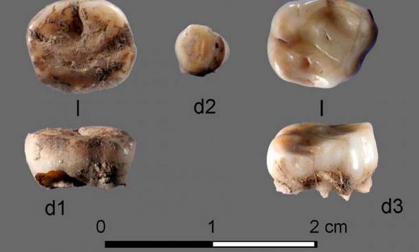 Los dos dientes de leche de 31,000 años de antigüedad encontrados en el Sitio de Cuerno de Rinoceronte de Yana en Rusia, lo que llevó al descubrimiento de un nuevo grupo de siberianos antiguos. Crédito: Academia Rusa de Ciencias / Naturaleza