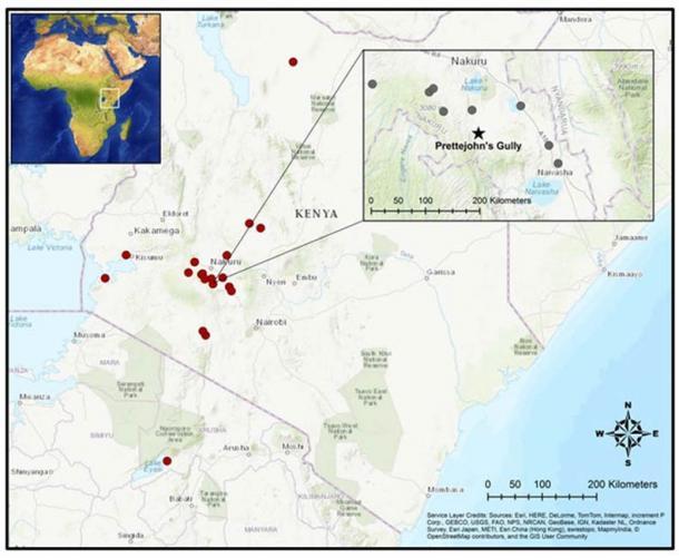 Los puntos rojos son sitios arqueológicos en el estudio de los autores. Los puntos grises marcan los sitios seleccionados del valle del Rift. El estudio geológico Gully de Prettejohn, marcado por una estrella negra, produjo el ADN antiguo más antiguo de Kenia. Elizabeth Sawchuk, CC BY-ND (La conversación)