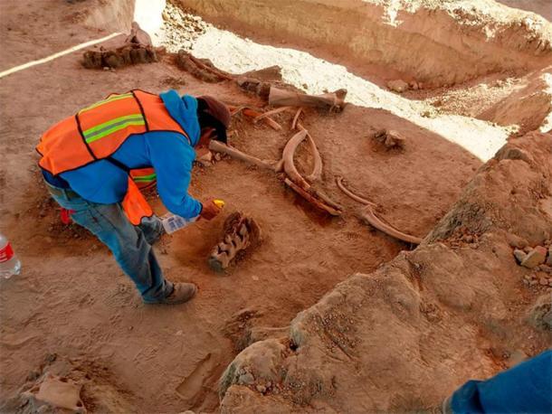 En el sitio mexicano se descubrieron más de 60 mamuts y otra fauna de la época del Pleistoceno. (INAH)