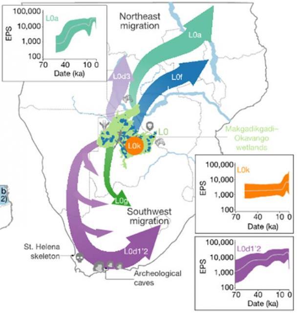 Mapa esquemático del sur de África que representa la patria AMH y la migración y divergencia fuera de la patria. (V. Hayes et al)
