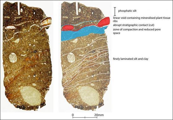 Sección delgada de micromorfología a través de la función de corte que contiene los nuevos restos de Neanderthal. (L. Farr / Antiquity Publications Ltd)