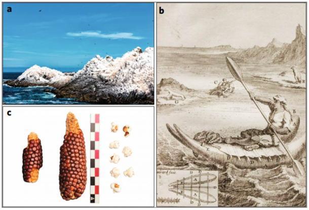 Imágenes modernas, históricas y arqueológicas asociadas al guano y cultivos de aves marinas. a. Acumulaciones modernas de guano de aves marinas en Patache, región de Tarapacá, norte de Chile (fotografía de Exequiel Sagredo Wildner), b. Hombre en una balsa de piel de león marino descrito por Frézier (1717). Las balsas se utilizaron para recolectar guano en la costa pacífica del norte de Chile (Cieza de León, 1984), c. Mazorca de maíz con granos y palomitas recolectadas en el sitio Formativo, Tarapacá 40 analizado en este trabajo. Barra de escala, 10 cm. (Francisca Santana-Sagredo / Plantas naturales)