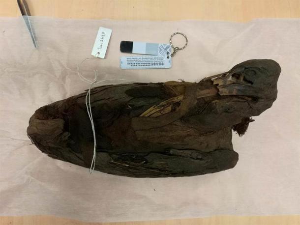 La imagen muestra un pájaro sagrado momificado, un ibis, de las colecciones de egiptología del Musée des Confluences de Lyon. (Romain Amiot / LGL-TPE / CNRS)