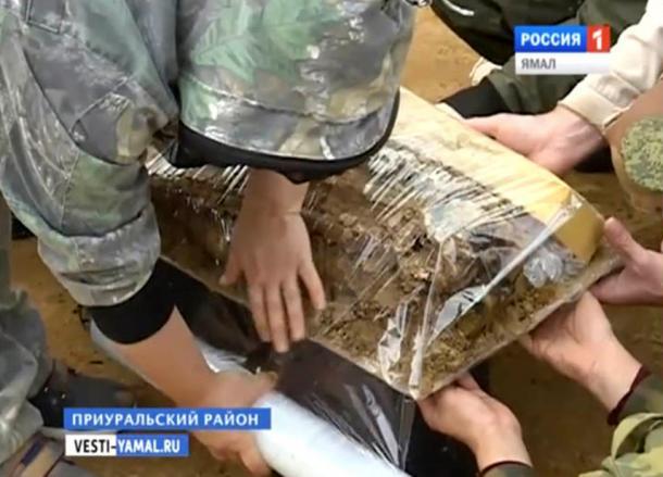 """""""El hallazgo se encuentra en Salejard ahora, en el Museo Shemanovsky, dentro de un congelador especial. Tenemos la intención de volver a Salejard el 15 de julio e inmediatamente comenzaremos a abrir el """"capullo""""."""
