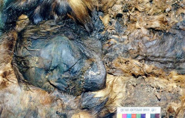 Se encontraron cinco momias cubiertas en cobre, minuciosamente envueltas en pelo de reno, castor, y carcayú y oso.