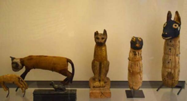 Exposición que muestra gatos momificados en el Museo del Louvre. (Netha Hussain / CC BY SA 4.0)