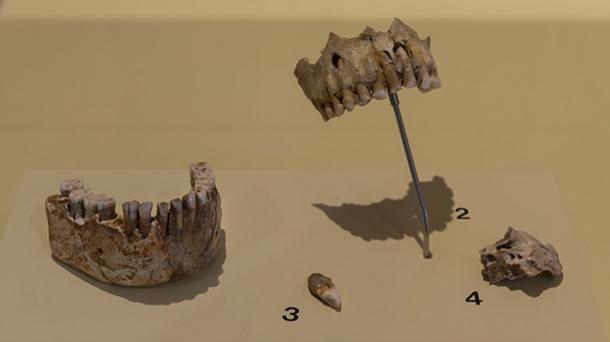 Los neandertales comían plantas como evidencia del estudio de los dientes neandertales. (Thilo Parg / CC BY-SA 4.0)