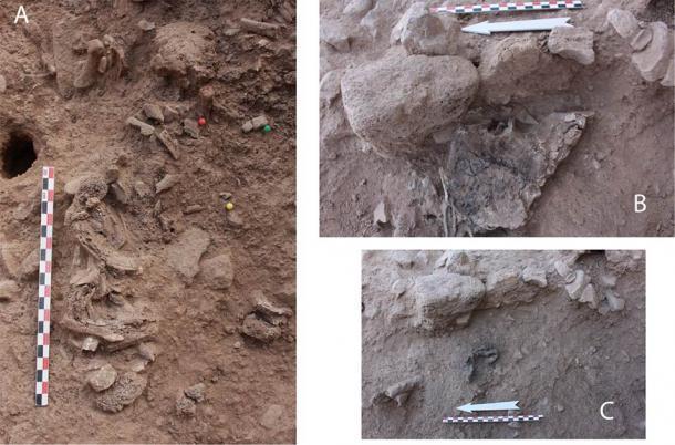 Imagen de huesos in situ: A. Segmento de esqueleto axial: costillas y vértebras expuestas en el centro de la estructura. B. Coxal derecho in situ; conservado casi completo por un pedazo de muro de barro colapsado (ver Fig. 2D). C. Cuatro falanges proximales del pie derecho que se encuentran directamente debajo del coxal derecho. (© 2020 Bocquentin et al / PLoSONE)