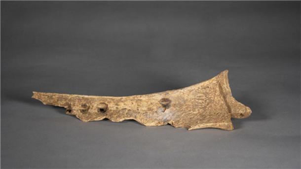 Un pedazo de hueso de oráculo descubierto en el sitio de Chaizhuang en Jiyuan, provincia de Henan en China central. (Instituto Provincial de Reliquias Culturales y Arqueología de Henan / Xinhua)