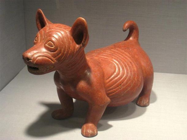 Figura de perro barrigón, México, Estado de Colima, 200 a.C. - 500 d.C., cerámica, colección precolombina en el Museo de Arte de Worcester, Worcester, Massachusetts, Estados Unidos. (Dominio publico)