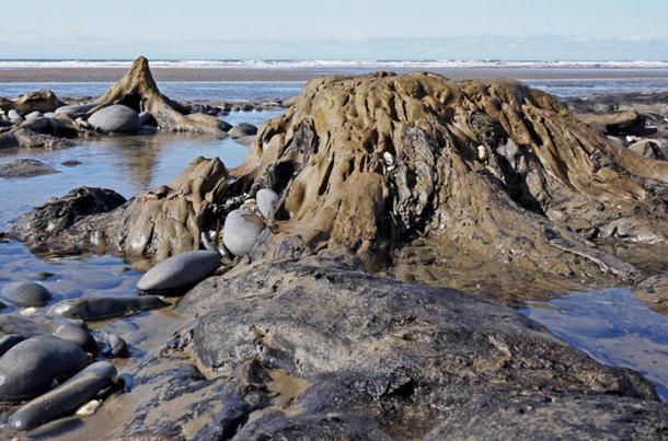 Árboles prehistóricos fosilizados fuera de la Bahía de Cardigan son a veces revelados por la marea baja. Sera este la Isla legendaria de Cantre'r Gwaelod?