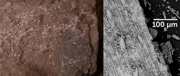 Los fragmentos de pasto preservados descubiertos en una cueva sudafricana, a la izquierda, son, con mucho, los ejemplos más antiguos conocidos de camas de pasto, dicen los investigadores. Las imágenes en primer plano de esos fragmentos tomadas con un microscopio electrónico de barrido, como el que se muestra a la derecha, ayudaron a delimitar qué tipo de hierbas se utilizaron para la cama. (Imagen: L. Wadley, Science)