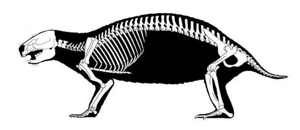 """Esqueleto reconstruido de Adalatherium hui (""""bestia loca"""") que muestra las muchas vértebras de la especie. (Scott Hartman / Nature)"""