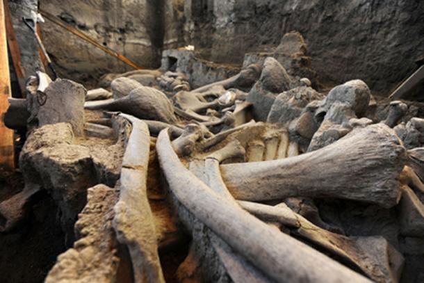 Restos de mamut encontrados en Tultepec, Estado de México en 2016. (Mauricio Marat / INAH)