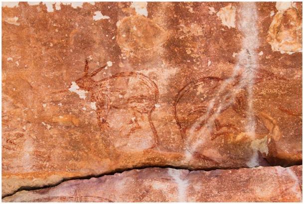El equipo de investigación descubrió lo que parecen ser un par de representaciones de arte rupestre de Maliwawa de dos bilbies consecutivos en el sitio de Awunbarna. (P. Taçon / Arqueología australiana)