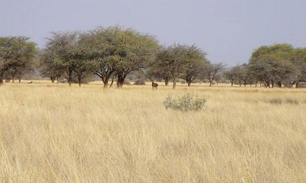 Sabana (y animales) cerca de Kuruman, Sudáfrica. (Dominio publico)