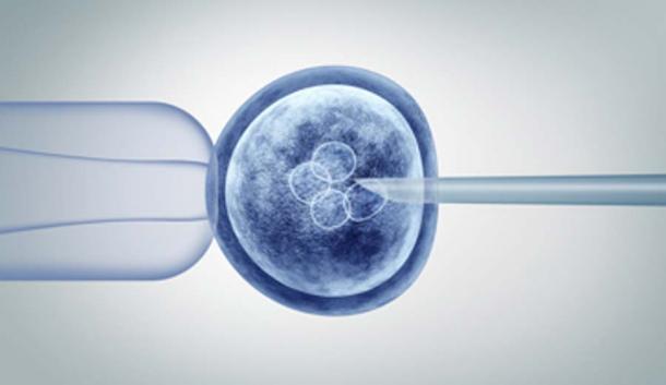 Los científicos inyectaron células madre humanas en el embrión de mono para crear el híbrido animal-humano. (freshidea / Adobe Stock)