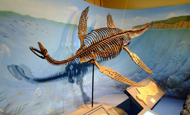 Los avistamientos pueden haber sido provocados después de que se descubrieron los fósiles de dinosaurios. Esqueleto restaurado del plesiosaurus. (FunkMonk / CC BY-SA 2.0)