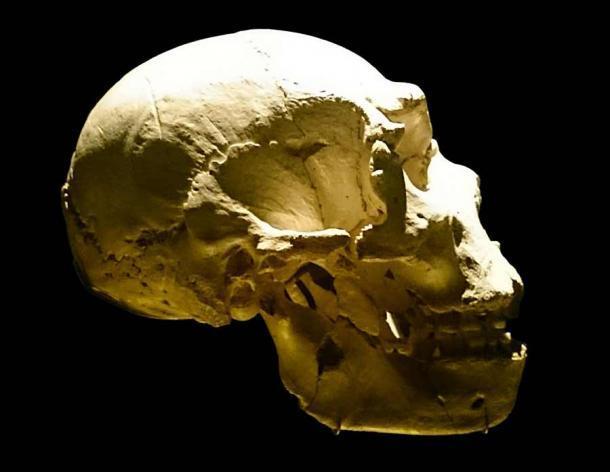 """También se creó un cráneo de Sima de los Huesos (en la foto aquí) para el estudio utilizando una reconstrucción virtual basada en fósiles. El estudio concluyó que esta especie no podía """"oír"""" sonidos como los neandertales. (UtaUtaNapishtim / CC BY-SA 4.0)"""