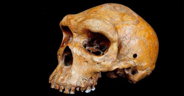 El cráneo de Broken Hill de Zambia es más joven de lo que los científicos sospechaban anteriormente. (Museo de Historia Natural de Londres)