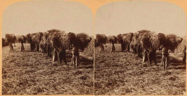 Esclavos llevando gavillas de arroz, Carolina del Sur. (Dominio público)