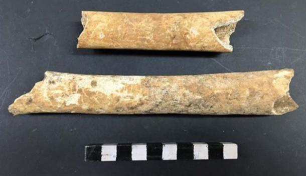 Algunos de los huesos del antiguo cementerio. Crédito: Arqueología Gales.