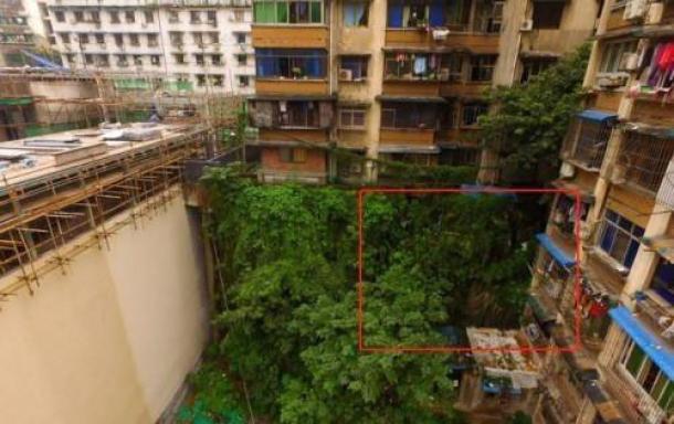 La estatua de 'Buda' (ubicación identificada con el cuadrado rojo) solía estar cubierta por un denso follaje. (Weibo)
