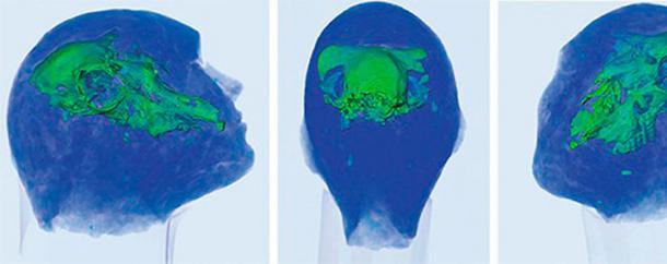 """""""Se sugirió que había un cráneo humano adentro. Por supuesto, fue bastante sorprendente ver en su lugar el cráneo de una oveja"""". (Imagen: Evgeny Babichev, Instutute of Nuclear Physics, SB RAS)"""