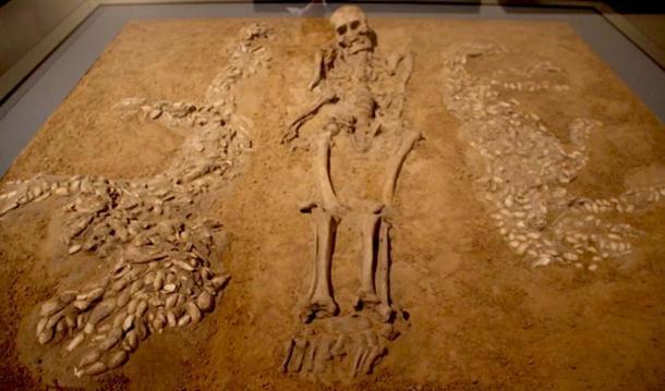 Los huesos humanos encontrados en el asentamiento de la Amazonia fueron preservados debido a los fragmentos de conchas enterradas con el cuerpo. (Ismoon / CC BY-SA 4.0)
