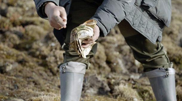 Los restos de la bestia extinta pesan 23.6kg, ahora se regresan a la capital regional, Yakutsk, para un estudio más detallado. Imágenes: Innokenty Pavlov