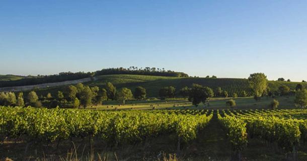 El vino del naufragio es más probable que provenga de un viñedo en el suroeste de Francia. (FreeProd/ Adobe Stock)