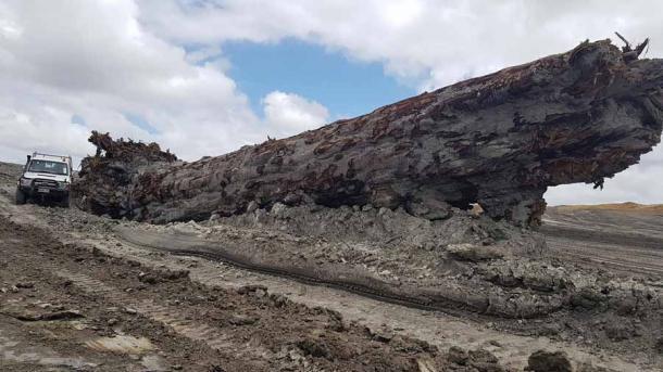 Qué increíble que un antiguo tronco de árbol kauri de Nueva Zelanda pueda decirnos tanto sobre cómo era la Tierra hace 42.000 años durante un cambio de polos. (Nelson Parker)