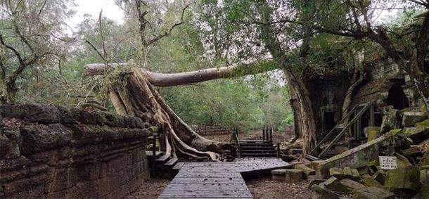 Los árboles se derrumbaron en los templos de Angkor Wat debido a los fuertes vientos. (Knongspor)