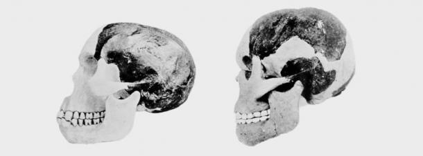 Dos científicos involucrados en el caso del hombre de Piltdown intentaron reconstruir el cráneo y la mandíbula del hombre de Piltdown. (Foto del Museo Británico de Historia Natural)