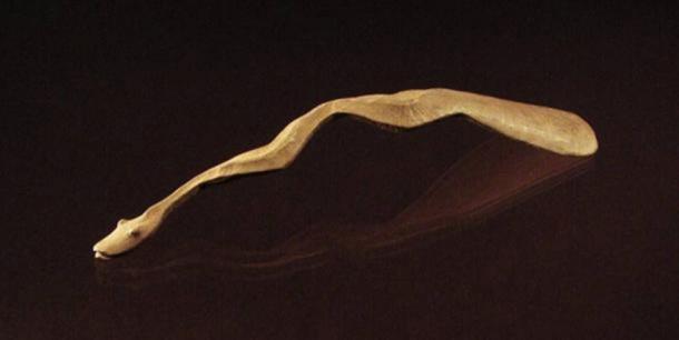 Uno de los bienes graves asociados con el hombre de la Edad de Bronce Siberiana: una cuchara de hueso única con un mango de serpiente enrollado tallado. Crédito: Angela R. Lieverse et al.