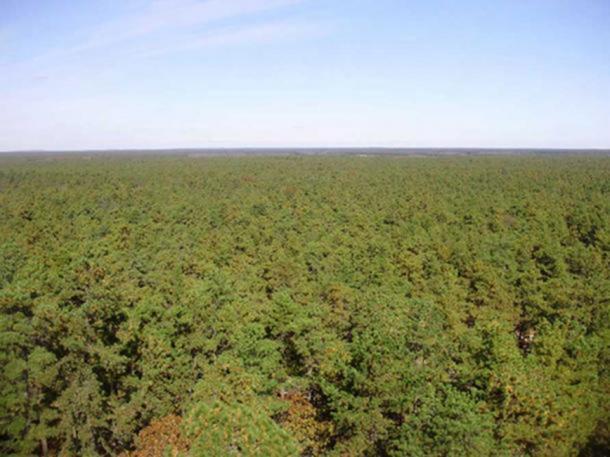 Vista del norte desde una torre de fuego en Apple Pie Hill en Wharton State Forest, el punto más alto en New Jersey Pine Barrens. (CC BY 3.0) El diablo de Jersey supuestamente habitaba esta región.