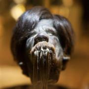 Cabeza encogida en el Museo de Cuenca - Ecuador (Imagen: Ancient Origins)