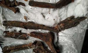 Las partes de momia de contrabando se encontraron metidas en un altavoz.