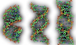 Portada-De izquierda a derecha, las estructuras de ADN A, B y Z. (Public Domain)