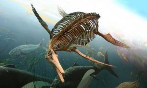 Portada-Esqueleto fosilizado de ictiosaurio del Museo Nacional de Historia Natural del Instituto Smithsoniano. (Ryan Somma/CC BY-SA 2.0)