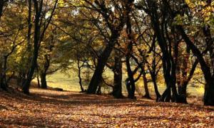 Portada - Fotografía del misterioso Bosque Hoia Baciu de Transilvania, Rumanía. (Fotografía: La Gran Época)