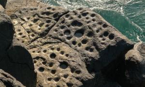 Portada-Conjunto de cazoletas en las rocas del litoral de Los Guinchos (Breña Alta), en la isla canaria de La Palma.(Fotografía: eldiario.es)