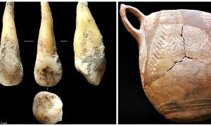 Portada-A la izquierda el diente cuyo genoma se ha secuenciado, descubierto en una cueva española. Perteneció a una agricultora neolítica de hace 7.400 años. A la derecha: restos de cerámica cardial, típica de la cultura a la que pertenecía esta agricultora del Neolítico.