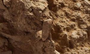 Portada-El diente antes de ser extraído del montículo de tierra en el que fue descubierto-cueva de Arago-Tautavel-Francia